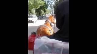 VLOG  Катя в бакуриани! Лошадь обалдела))!!!