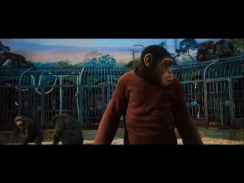 RISE OF THE PLANET OF THE APES (2011): Ceaser Confronts Koba