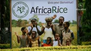 AfricaRice : Uganda--blazing a trail to rice success