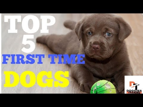 top-5-dogs-for-first-time-owners-||doggies-training