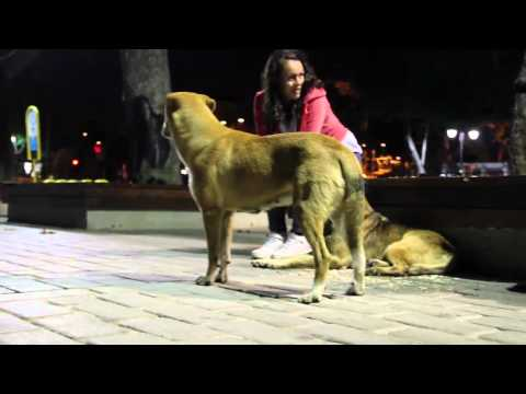 Wonderful Behaviour of Street Dogs During Islamic Call - Thumbs Up Africa Shorts 1