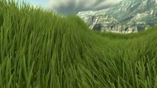Real-time grass rendering