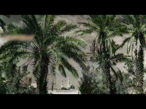 প্রিয় নবীজি (স:) দরবারে একটি গাছ লাফিয়ে লাফিয়ে  নবীজির (স.) সামনে উপস্থিত!জানুন সেই অবিস্মরণীয় ঘটনা!