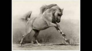 the Arabian Horse-الحصان العربي