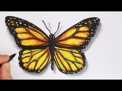 How to Draw a Realistic Butterfly: Time Lapse