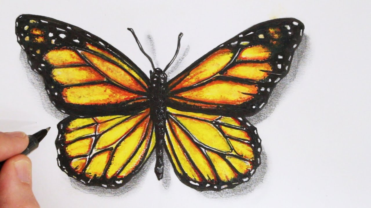 How To Draw A Butterfly Realistic