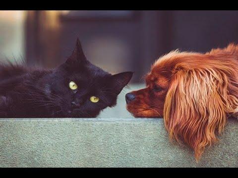 Ni Perros Ni Gatos Transmiten El Coronavirus