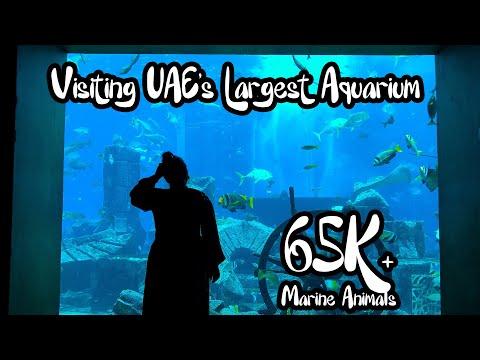 VISITING LOST CHAMBERS AQUARIUM AT ATLANTIS, THE PALM DUBAI…65k MARINE ANIMALS?? l SHARO KHAN VLOGS