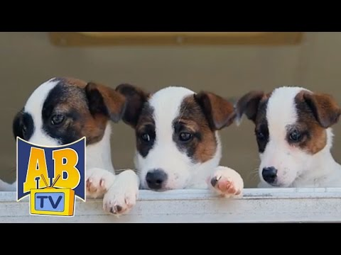 Kids TV Shows | Puppy School - Snack Time | Air Bud TV | Dog Shows | Pup Star