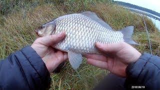 Рыбалка на крупного карася в сентябре (3 выезд)