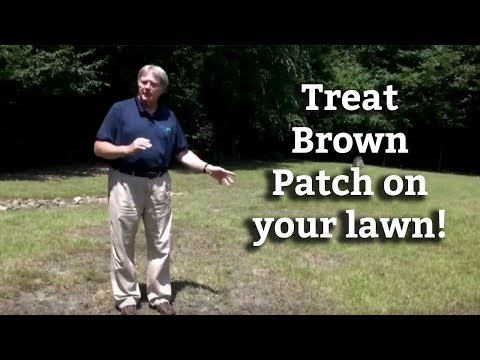 Brown Patch and Large Patch Lawn Disease