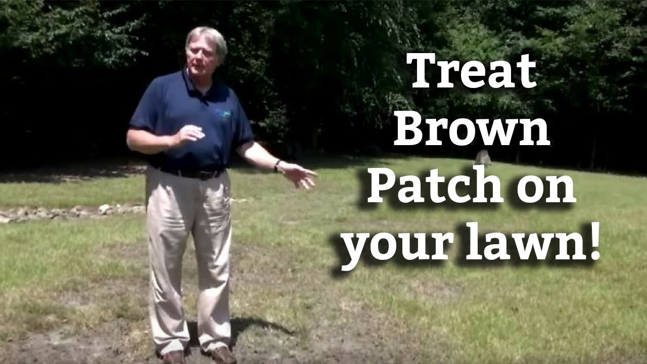 Brown Patch Disease In St Augustine Lawn - Saint Augustine