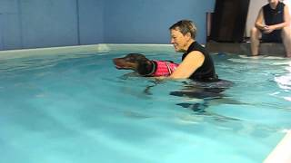 Doberman Pinscher's 2nd Swimming Lesson - Swims Almost Like A Lab Dog Now!