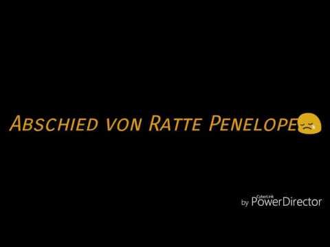 Abschied von Ratte Penelope
