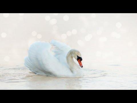 Klidná A Jemná Hudba Pro Relaxaci Nebo Spánek Part 2 (Relaxační Video S Jemnou Hudbou)