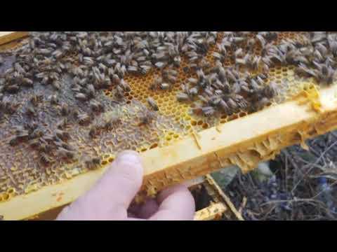 Stupina De Teste A Lui Andrei Vaida. Albinele în Martie 2020. Testam Rețeta De Sirop Cu Minerale