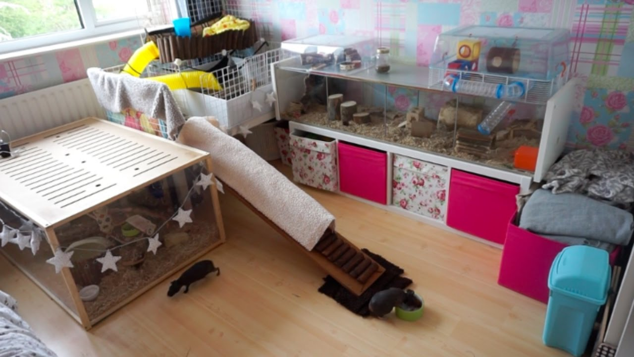 Tour Of My 'Pet Room'