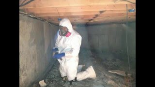 Mold Removal Aspen Colorado