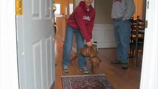 Off Leash Dog Training Success: Nick The Vizsla