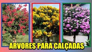 6 Espécies de Arvores de Flores Incríveis para Plantar na Calçada