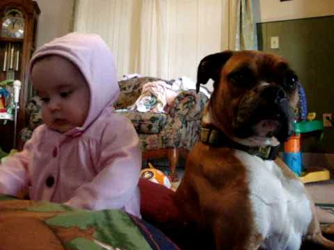 boxer and baby