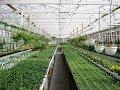 Best Simple & Modern Aquaponics, PVC and Passive Solar Greenhouse Design