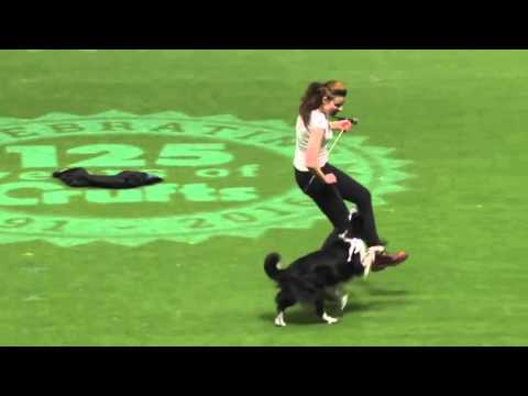 Irena Istvankova & Mystic Layla Aibara - Crufts 2016 - 3rd place (12.3.2016)