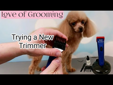 Trying out the Wahl+ BravMini Dog Trimmers | Wahl Mini Bravura Clippers on a Poodle