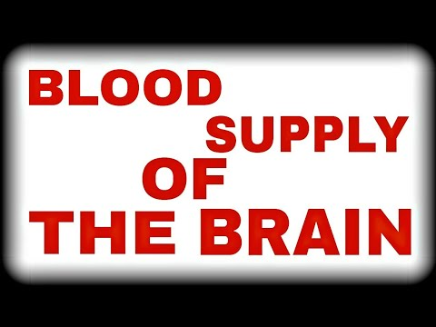 Circle Of Willis (Blood Supply Of Brain) A Short Overview...