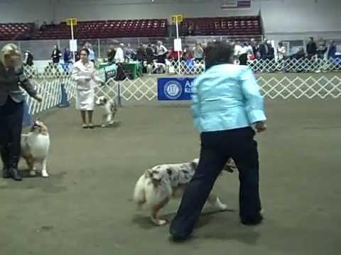 2008 CONFORMATION DOG SHOW ~ Monroe, WA 2 of 3