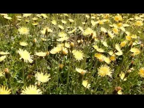 Цветы луговые  Июнь