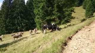 Summer Alpine hike / Allgäu