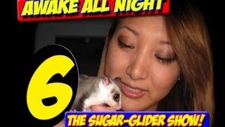 AWAKE ALL NIGHT THE SUGAR GLIDER SHOW EPISODE 6 APRIL 2013 Art food prep reptiles photo contest