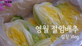 영월몰이 추천하는 영월 아삭 절임배추 ㅣ 김장하는 날 …