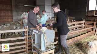 L'élevage ovin en PACA