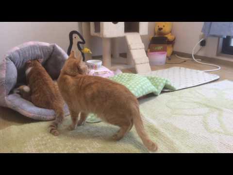 ふみふみ順番待ちの猫『保護猫るる らら物語』