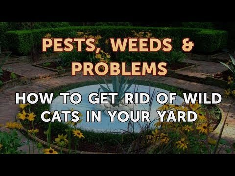 How to Get Rid of Wild Cats in Your Yard - YouTube