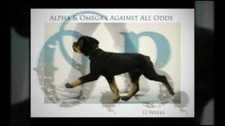 Alpha & Omega's Against All Odds Indianarottweiler.com