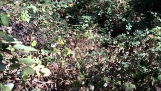 Hiking at The Wildlands Conservancy, Oak Glen Preserve, California