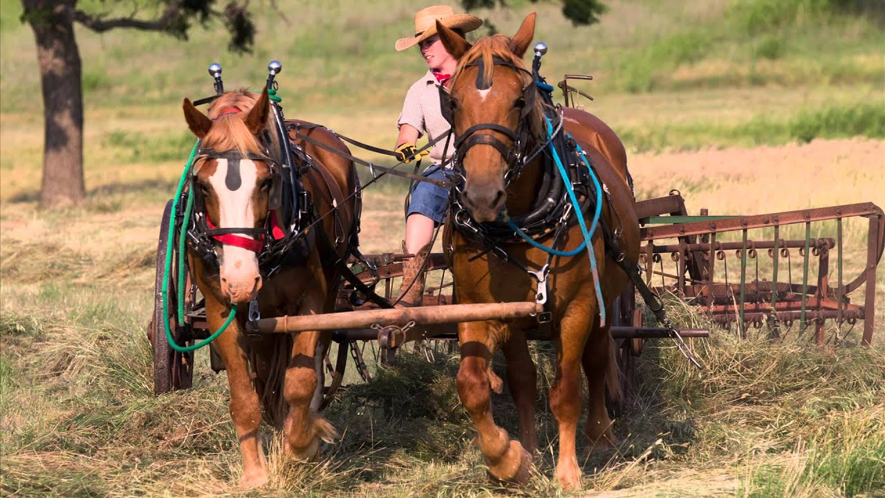 Cutting And Raking Hay With Horses In Oklahoma Youtube
