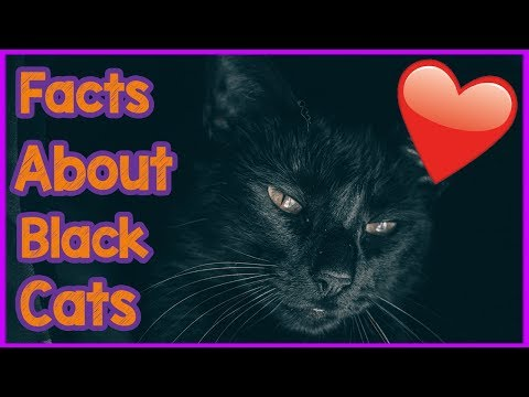 Top 5 Interesting Facts About Black Cats! The Most Interesting Facts and Info About Black Cats!