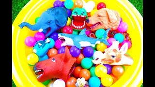 Learn Sea Animal and Zoo Animals Names Education Video Animal | Toys For Kids by Lucie TV