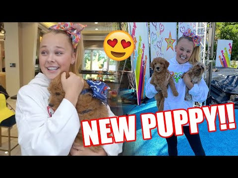 WE GOT A NEW PUPPY!!!!