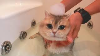 Секреты мытья котов и кошек