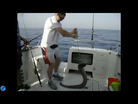 Fishing Big Fish On The Offshore, Get Many More Any Big Fish