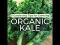 How to Grow Organic Kale