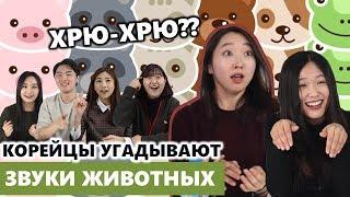 Корейцы угадывают звуки животных на русском / 러시아 동물 소리 맞추기!