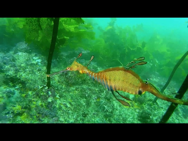 OzDive in Australia - Diving at Bare Island