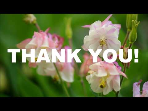 Thank You Pink Columbine Ecard