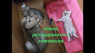 КОШКА РАЗГОВАРИВАЕТ С КОТЯТАМИ ГОВОРЯЩИЕ КОТЫ Мяуканье Кошка Mom Cat Talking to her Meowing Kittens